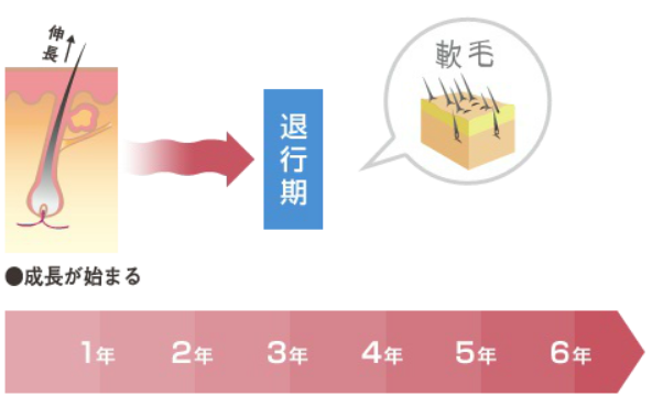 【出典】AGA-NEWS_AGAの成長期